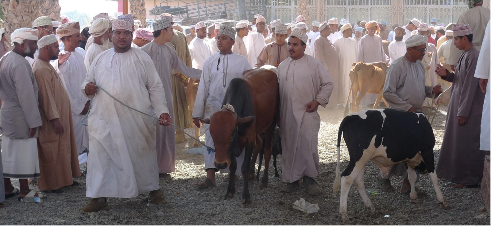 An animal Souq in Nizwa